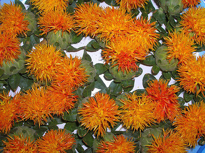 Safflower Seeds Orange Easy to Dry  Thistle Like Annual  500+ Bulk Seeds