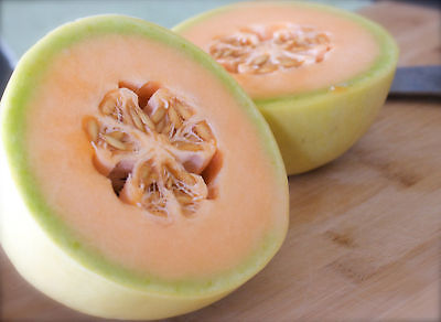 Melon Seeds - HONEYDEW - Sweetest of All Melons! -Source of Potassium- 20 Seeds