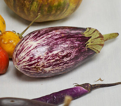 Eggplant Seeds - SHOOTING STARS STRIPED - F1 Hybrid - Great Taste! - 25 Seeds