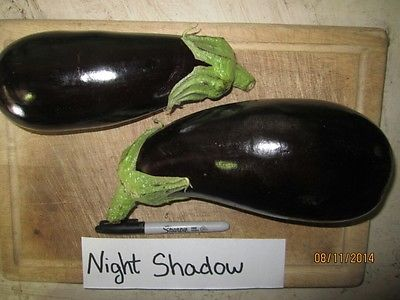 Eggplant Seeds - NIGHT SHADOW - Gmo Free - Excellent Tasting Variety - 25 Seeds