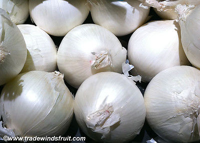 Sweet White Spanish Onions - Mild Tasting, Great for Cooking - 20 Bulbs / Sets