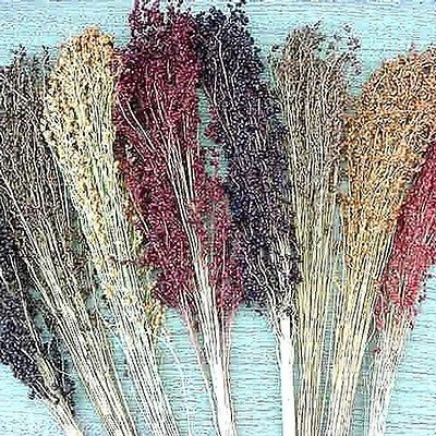 Grain Sorghum Seeds - Broom Corn - Create Your Own Rustic Broom - 50+ Seeds