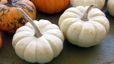 Mini Pumpkin Seeds - BABY BOO - Edible - Adorable Decoration - 10 Fresh Seeds