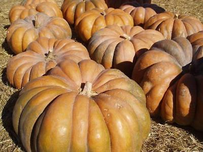 Pumpkin Seeds - FAIRYTALE - Unique Tan and Oak Color at Maturity - 10 Seeds