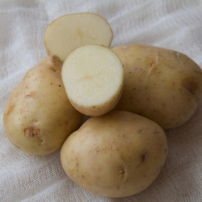 Potato Seed - *White* - Excellent choice for baked, fried, boiled - 20 Tubers!