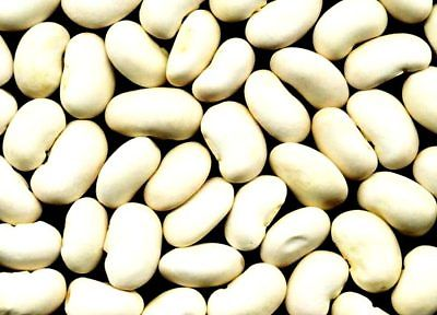 Bean Seeds - WHITE KIDNEY - Versatile Variety - theseedhouse - Organic- 50 Seeds