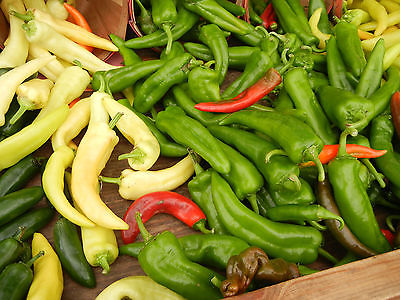 Pepper Seeds - ANAHEIM CHILI - Hot!!! - Versatile Vegetable - 40 Seeds