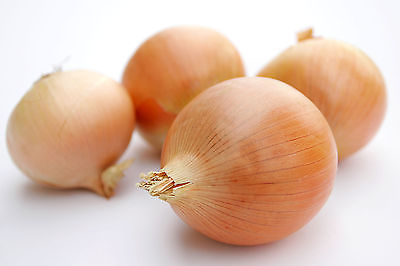 Onion Seeds - RICOCHET - Nice, Round Globe Shaped Bulb - Very Hardy - 50+ Seeds