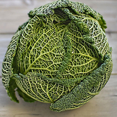 Cabbage Seeds - CHIEFTAIN SAVOY - Crinkled Leaves, Large Heads - 50 Seeds