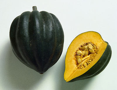 Squash Seeds - ACORN - Great With Butter and Lemon, or Brown Sugar - 10+ Seeds