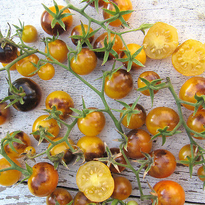 Tomato Seeds - GOLD BERRIES - Purple, Gold Cherry Tomato - Gmo Free - 10 Seeds