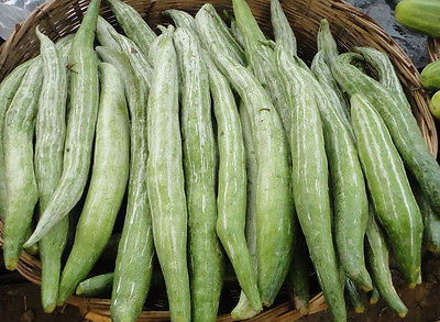 Serpent Cucumber - Gorgeous Flowers - Edible Vegetable - 10 Organic Seeds    :)