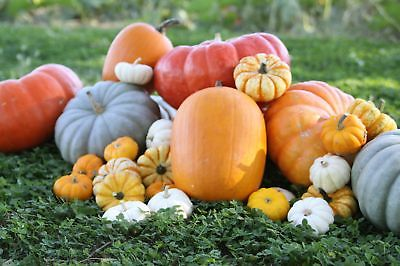 Pumpkin Patch - 5 Favorites - Heirloom Seeds - theseedhouse - 50+ Organic Seeds