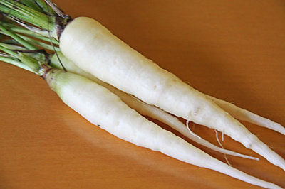 Carrot Seeds - SNOW MAN - Hybrid - GMO FREE - Novelty Carrot - 50 Seeds