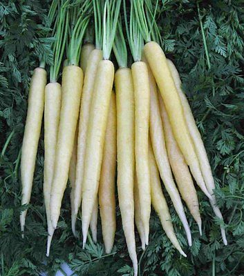 Carrot Seeds - CREME DELIGHT - Same Carrot Flavor - Unique Variety - 50 Seeds