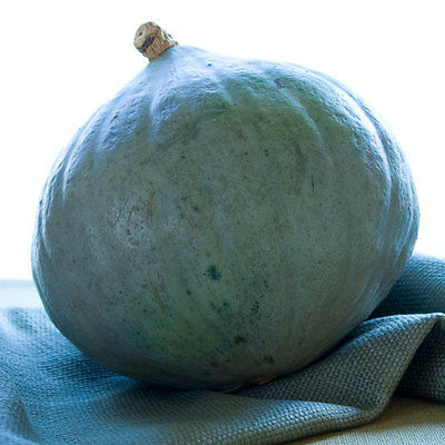Squash Seeds~ Baby Blue Hubbard ~Cucurbita Maxima~ Non Treated Seeds ~ 10+ Seeds